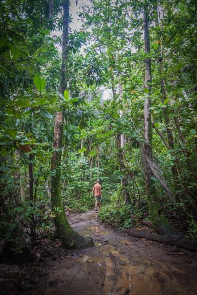 Täglicher Dschungel-Spaziergang zum nächsten Supermärktchen