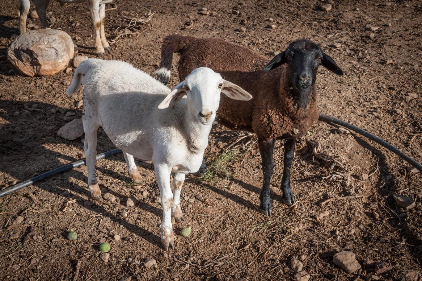 Wir haben Schafe gehütet, Hühner gefüttert,…
